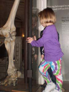 Fun with Kids in Washington DC - Natural History Musuem