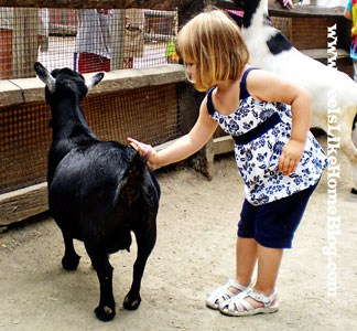 Petting the goats at the Philadelphia Zoo