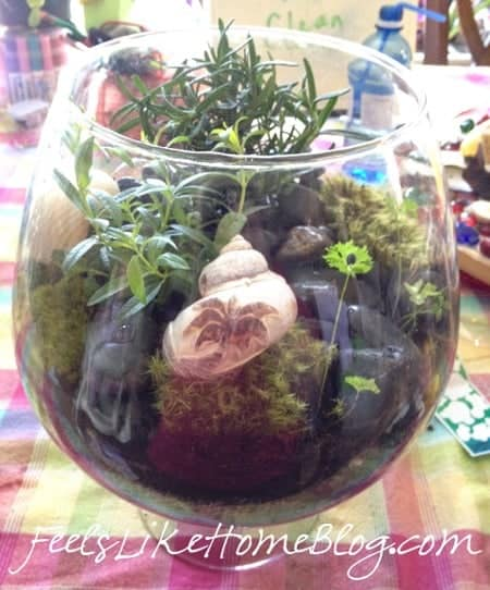 how to make an inexpensive terrarium
