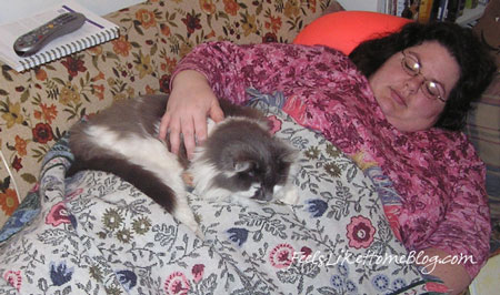 A cat lying on a woman