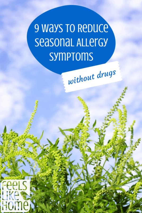 9 natural ways to reduce seasonal allergies
