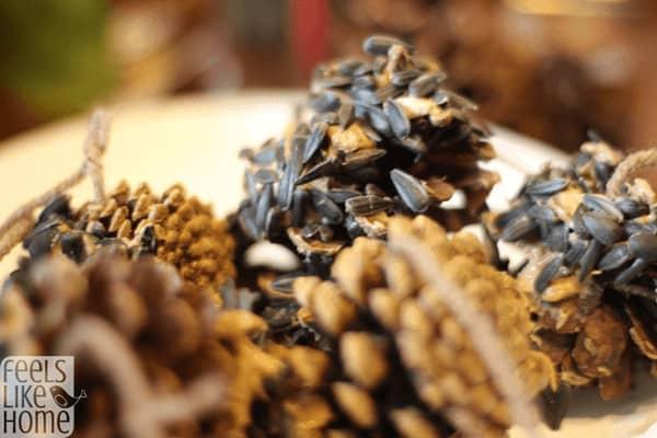 DIY pine cone bird feeder craft