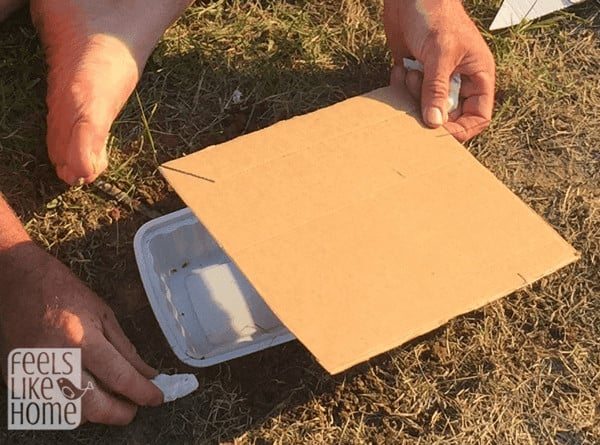 make-a-bug-trap-cover-kids-science-project-at-home