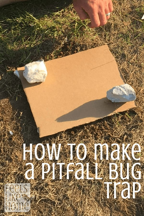 This is a simple and fun science project where kids can take a look at the insects in their own yards. Every yard has something to see!