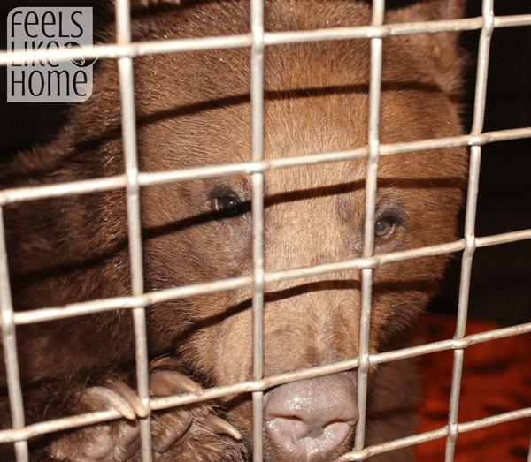 zooamerica-feeding-the-bears-murphy