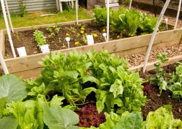 Ideas to help kids love flowers and vegetable gardens and gardening - Great for toddlers and preschool children or older kids. Fun things and suggestions for plants. Creative ideas for boys and girls. Cheap and awesome tips.
