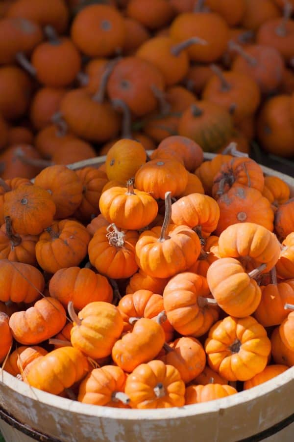 pumpkin-hunt-thanksgiving family games